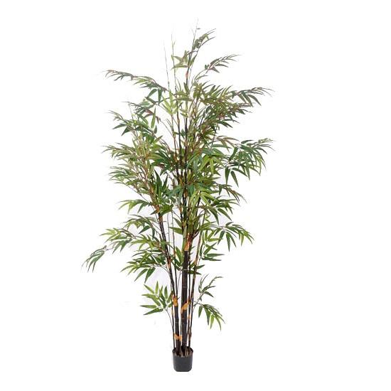 Bellatio flowers & plantsGrote bamboe plant 190 cm
