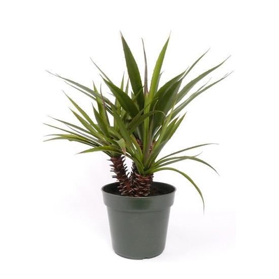 Bellatio flowers & plantsKunst Aloe Ferox plant