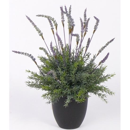 Bellatio flowers & plantsplant in pot 30 cm