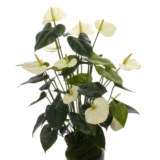 Bellatio flowers & plantsNamaak plant Anthurium 80 cm